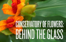 Conservatory of Flowers: Behind the Glass