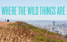 Places to Get a Little Nature in San Francisco