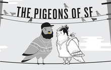 Pigeons of San Francisco