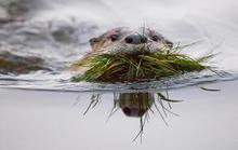 Otter Makes His Home In The Sutro Baths
