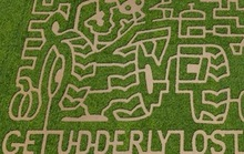 Get Lost in Bay Area Corn and Hay Mazes