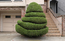 Portraits of SF's Domesticated Trees